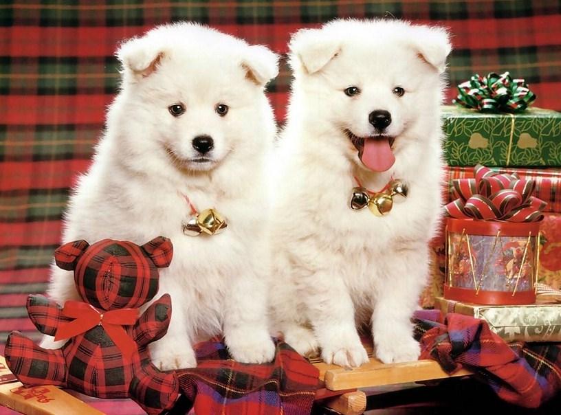 Cute Puppy Pics Christmas