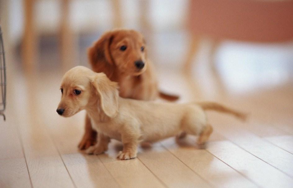 Cute Puppy Pics Tumblr