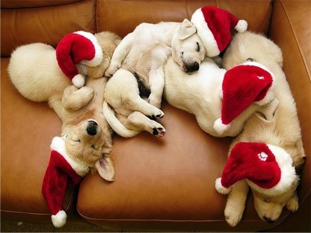 Cute Puppy Pics Wallpaper