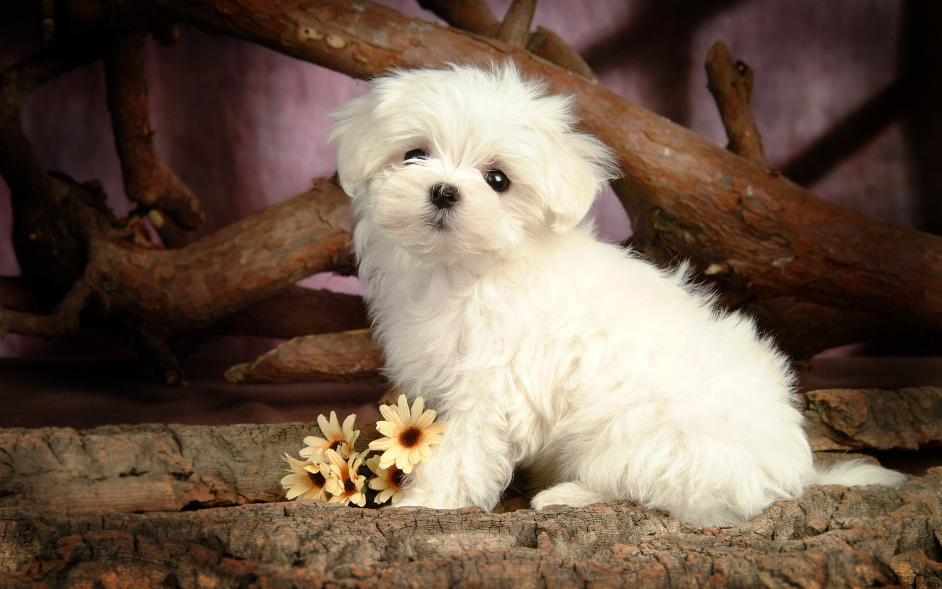 Cute Puppy Pictures Wallpaper