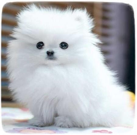 Cute Small Cat Breeds