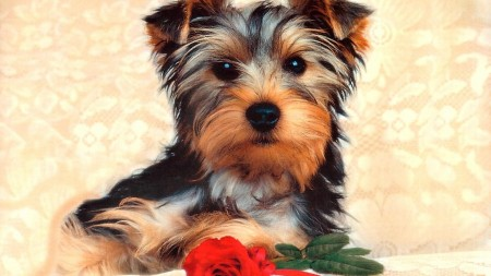 Cute Small Dogs Breed
