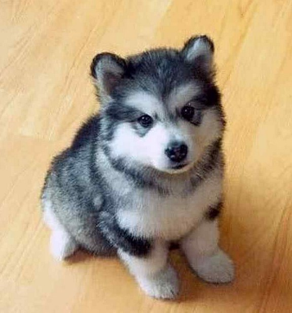 Cute Small Hypoallergenic Dogs
