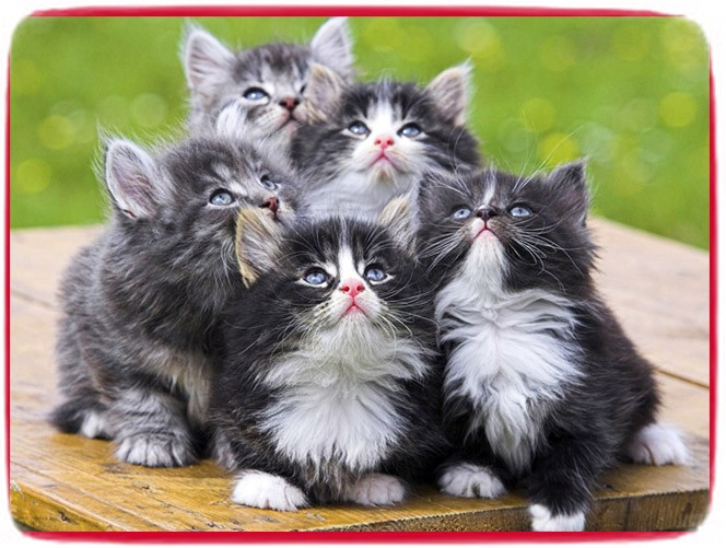Cutest Cat Breeds Uk