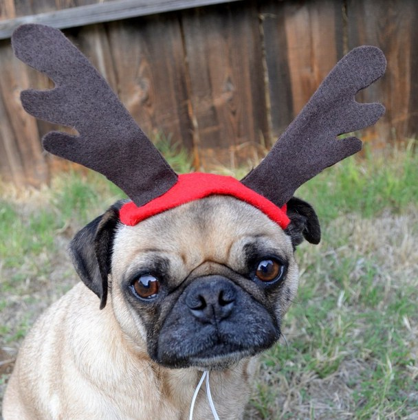 Deer Antlers For Dogs Petsmart