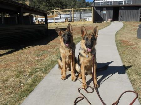 Denver Dog Training Classes