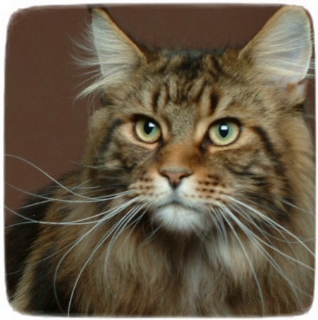 Different Breeds Of Cats Uk