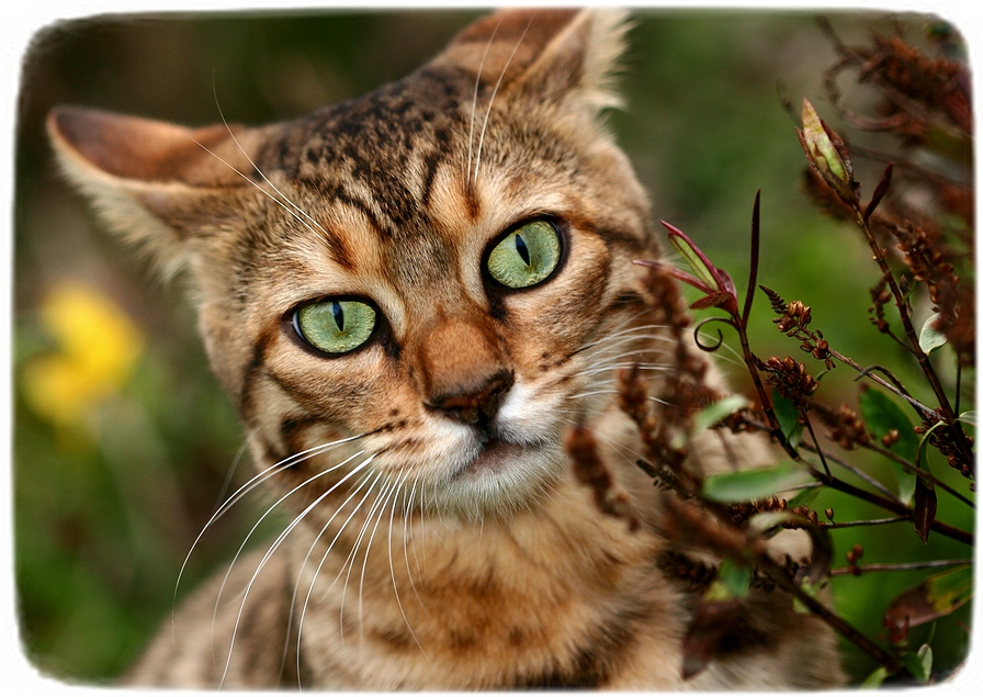 Different Types Of Cats Breeds