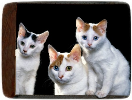 Different Types Of Cats Images