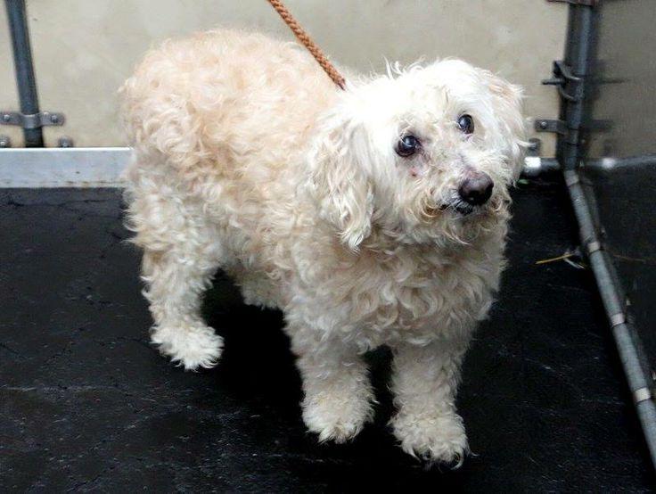 Dog Adoption Nyc Manhattan