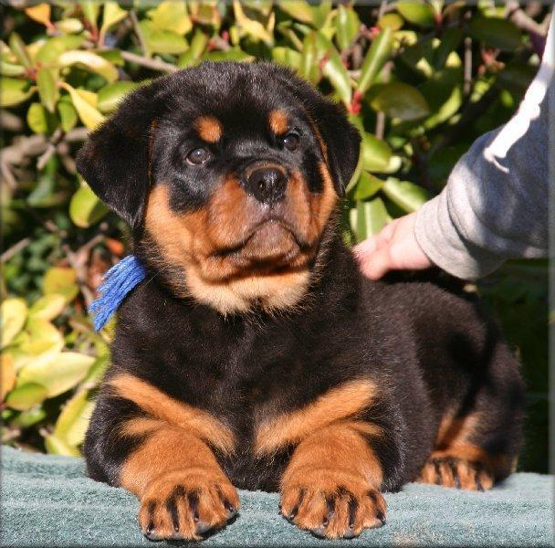 Dog Adoption Nyc Queens