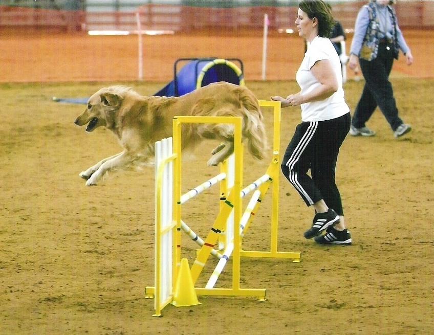 Dog Agility Training Dallas