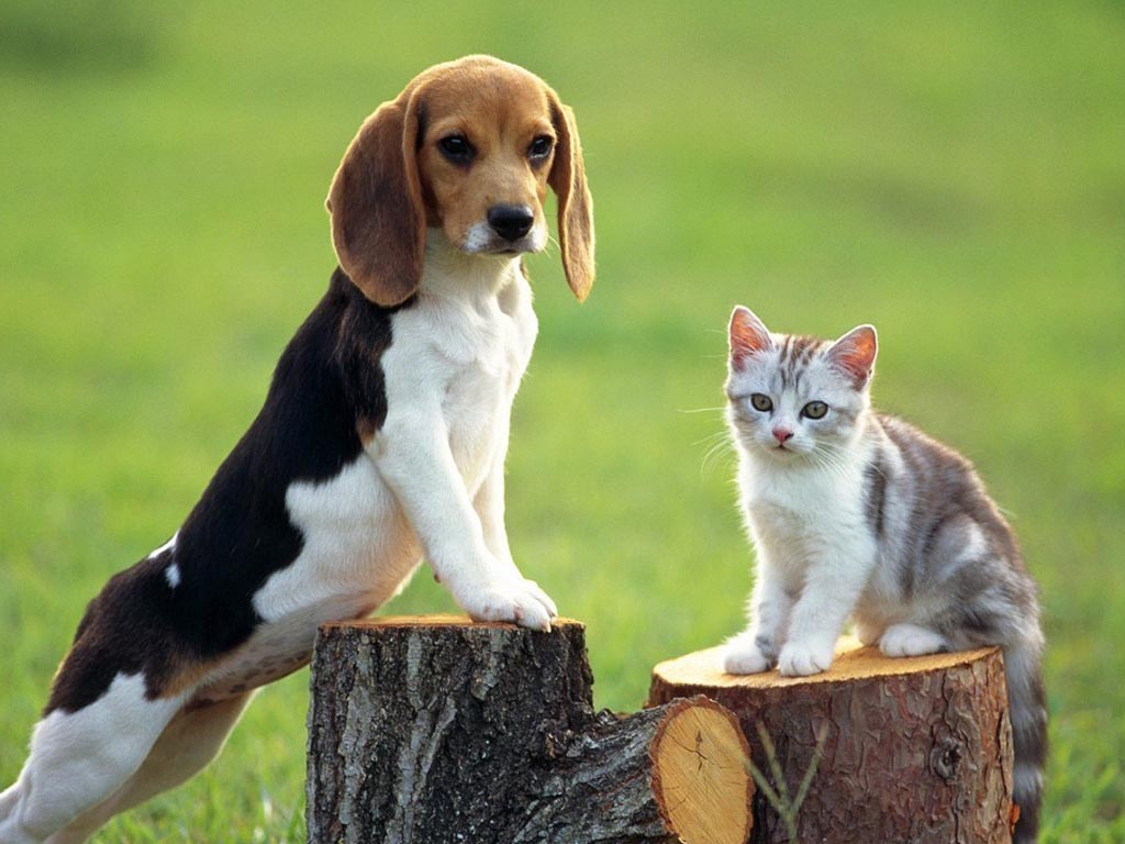 Dog And Cat Images