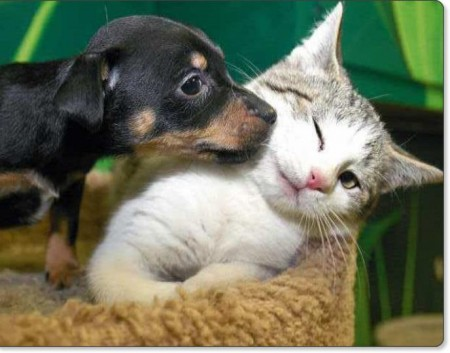 Dog And Cat Love