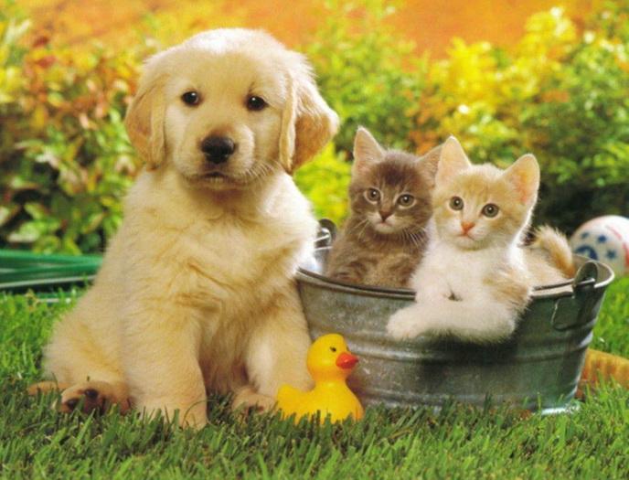 Dog And Cat Photos