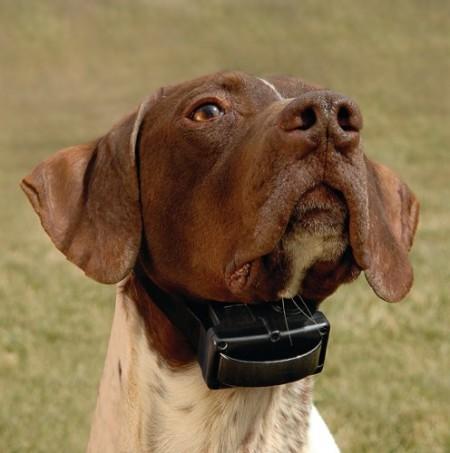 Dog Bark Collar Battery