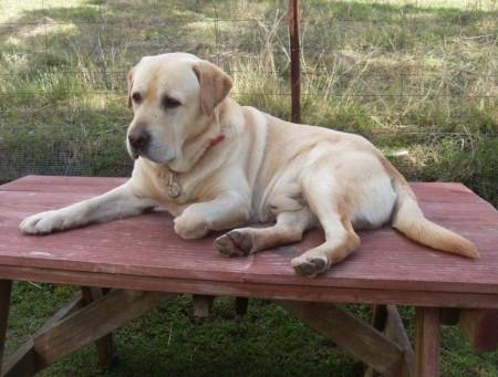 Dog Breed Finder Uk