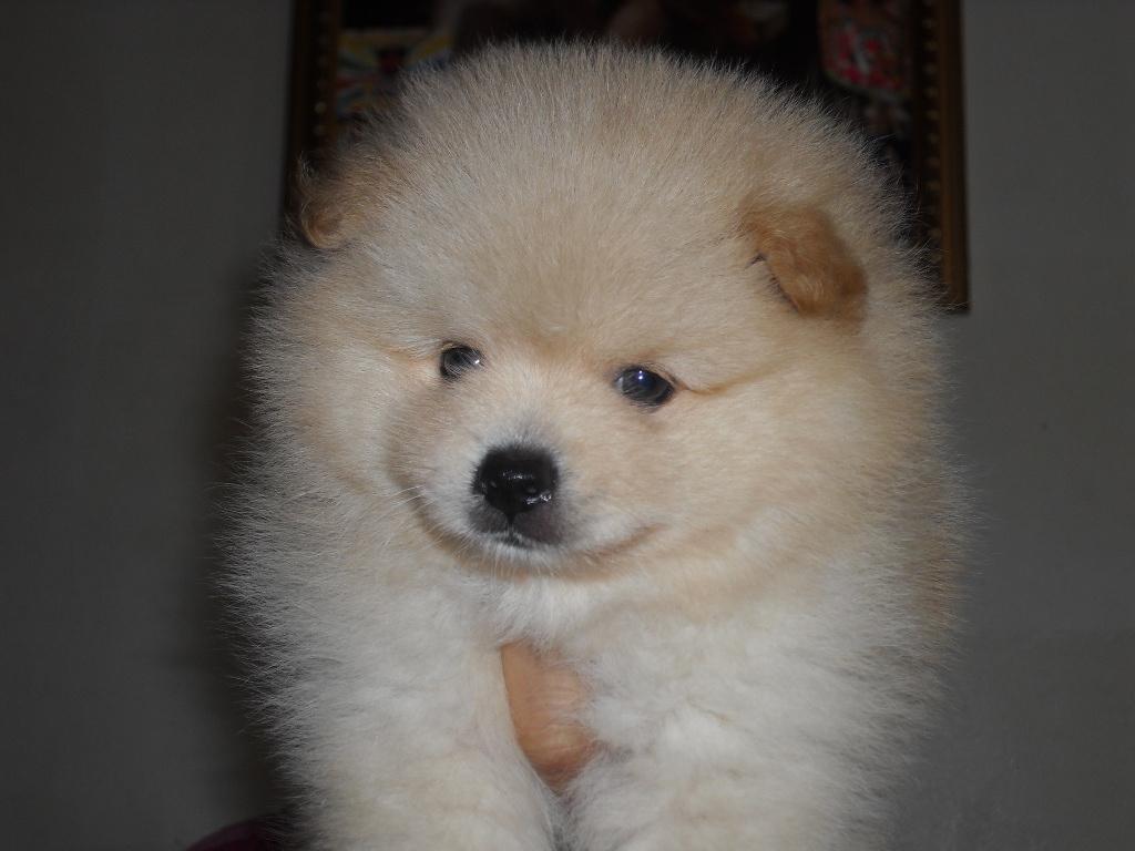 Dog Breed List Philippines