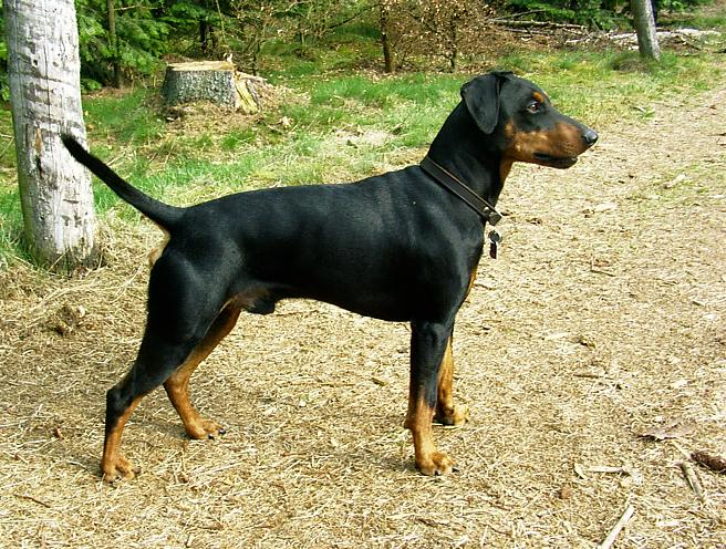 Dog Breed Selector Questionnaire