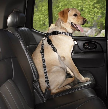 Dog Car Seat Harness