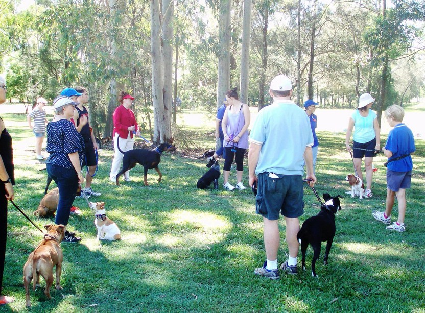 Dog Obedience Training Classes