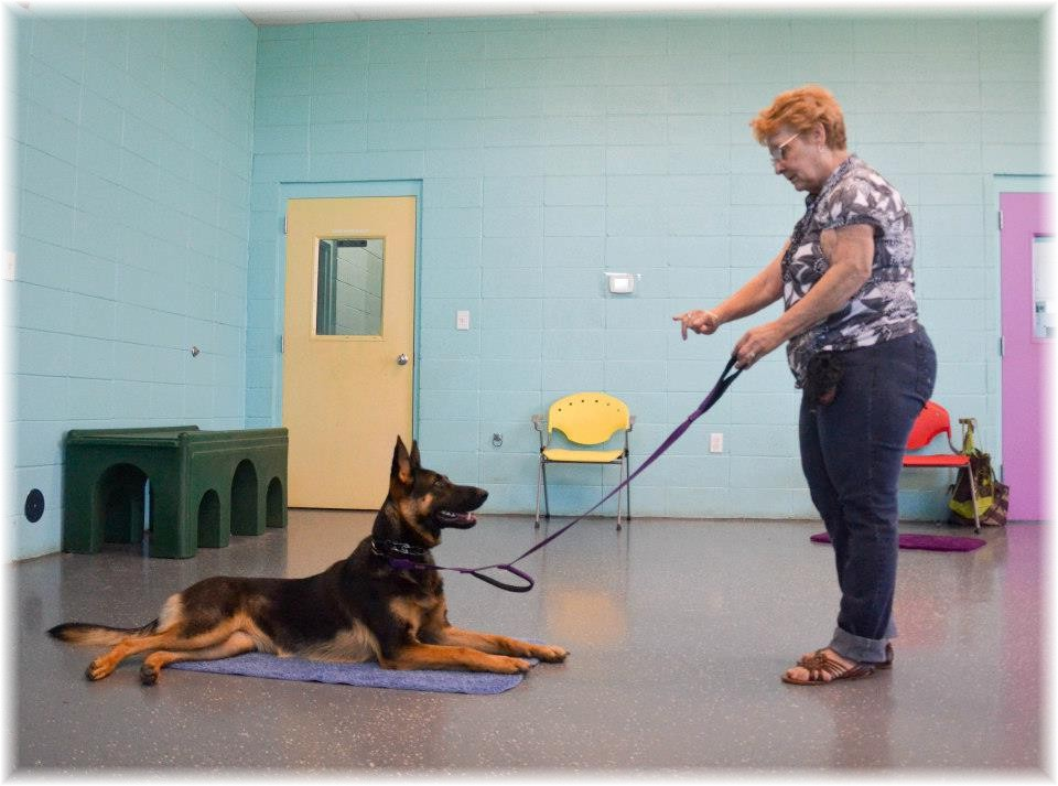 Dog Obedience Training Hand Signals
