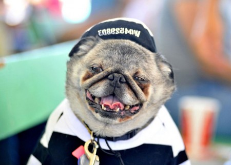 Dog Photo Contest 2013