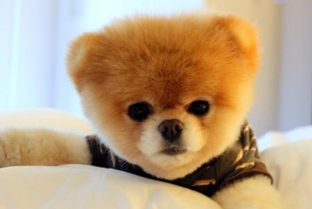 Dog Photo Contest 2014