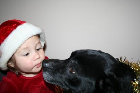 Dog Photo Contest December 2013