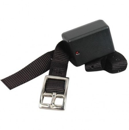 Dog Shock Collars Petcopet Photos Gallery Dog Pet