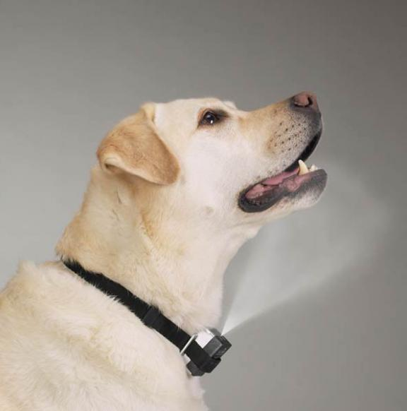 Dog Shock Collars Petco
