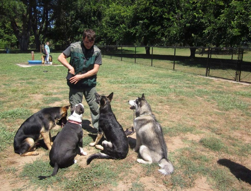 Dog Training Classes Los Angeles