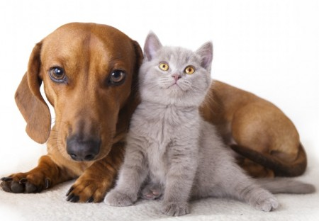 Dogs And Cats Images