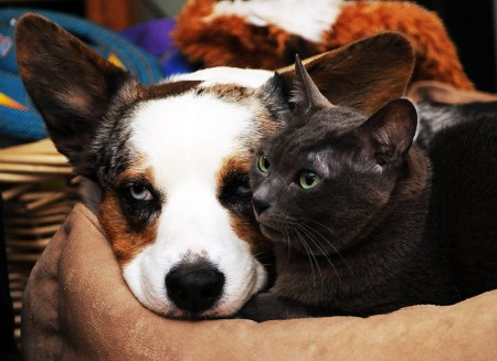Dogs And Cats Living Together Pictures