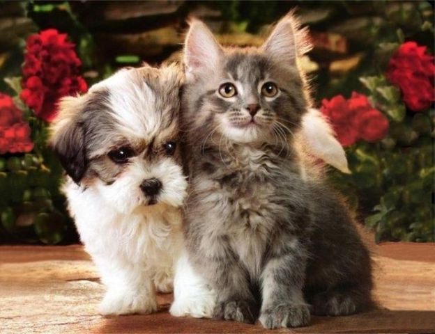Dogs And Cats Pictures