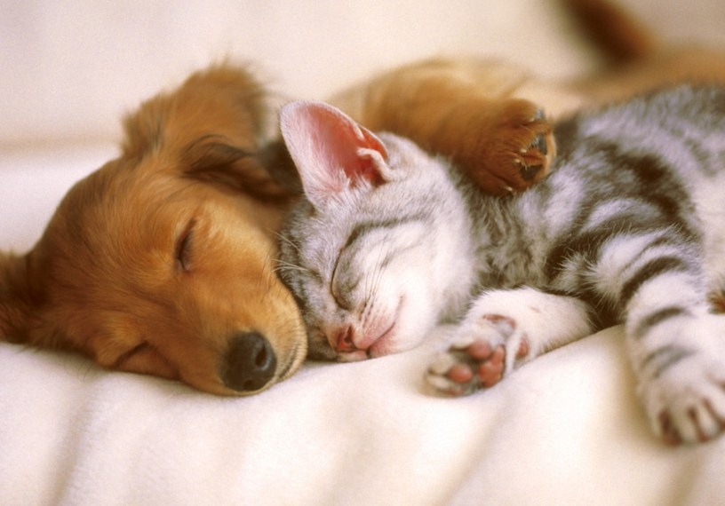 Dogs And Cats Sleeping Together