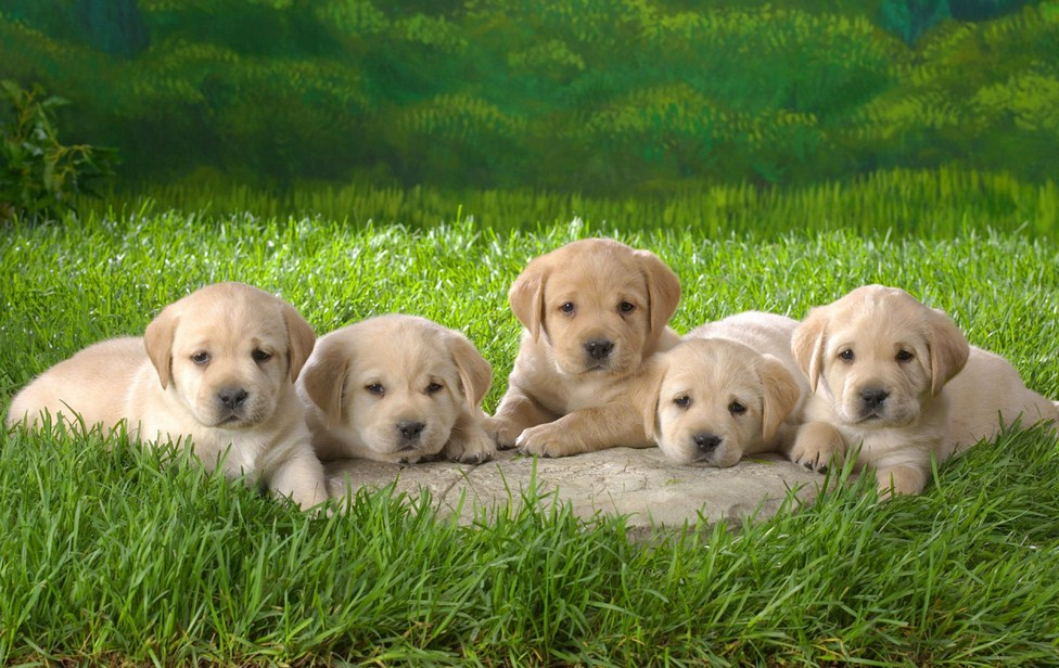 Dogs And Puppies Cute