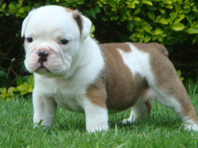 Dogs For Adoption In Va