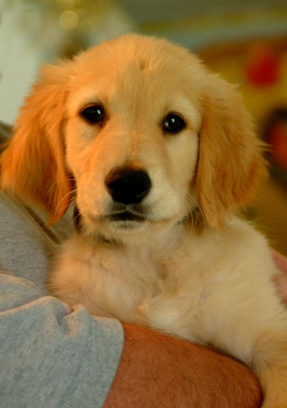 Dogs For Adoption Singapore