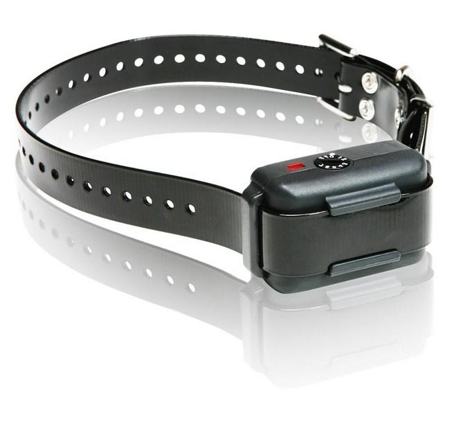 Electric Dog Collar Amazon