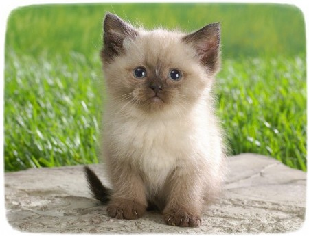 Exotic Cat Breeds With Pictures