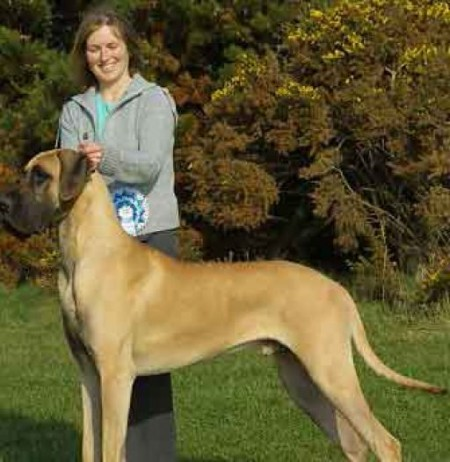 Extra Large Dog Breeds For Adoption