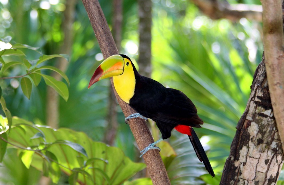Facts About Birds In The Rainforest