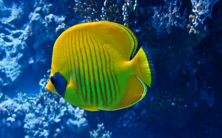 Fish In The Sea Pictures