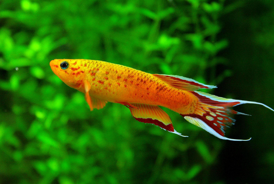 Freshwater Aquarium Fish Pictures And Names