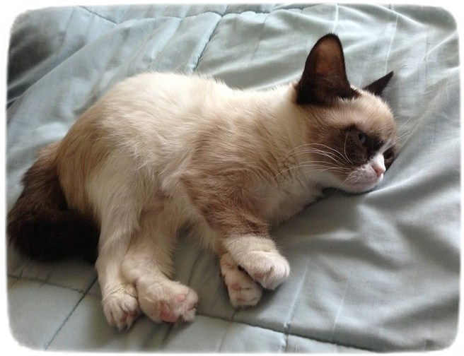 Funniest Grumpy Cat Pictures