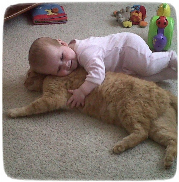 Funny Cat Photos For Kids