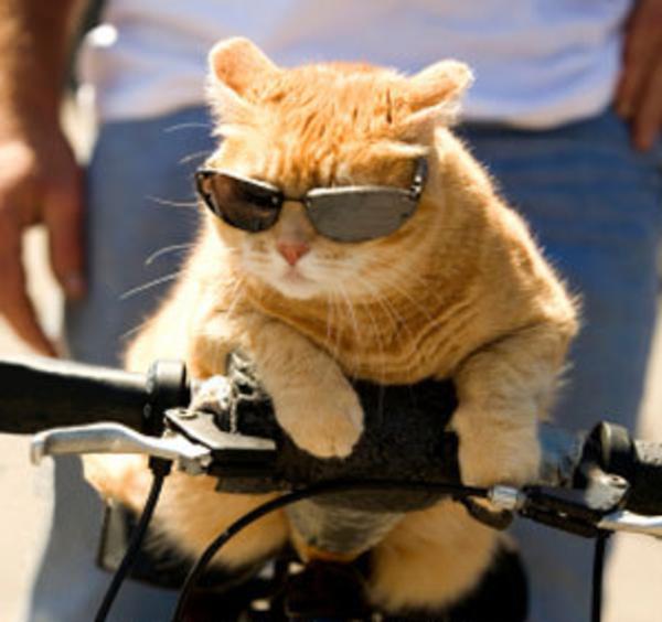 Funny Cat Pics With Guns