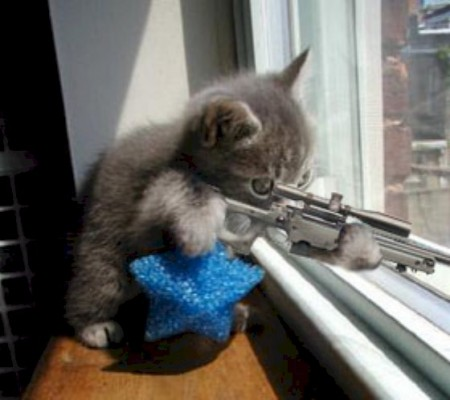 Funny Cat Pictures With Guns