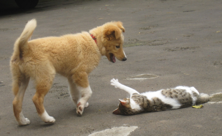 Funny Cats And Dogs Fighting
